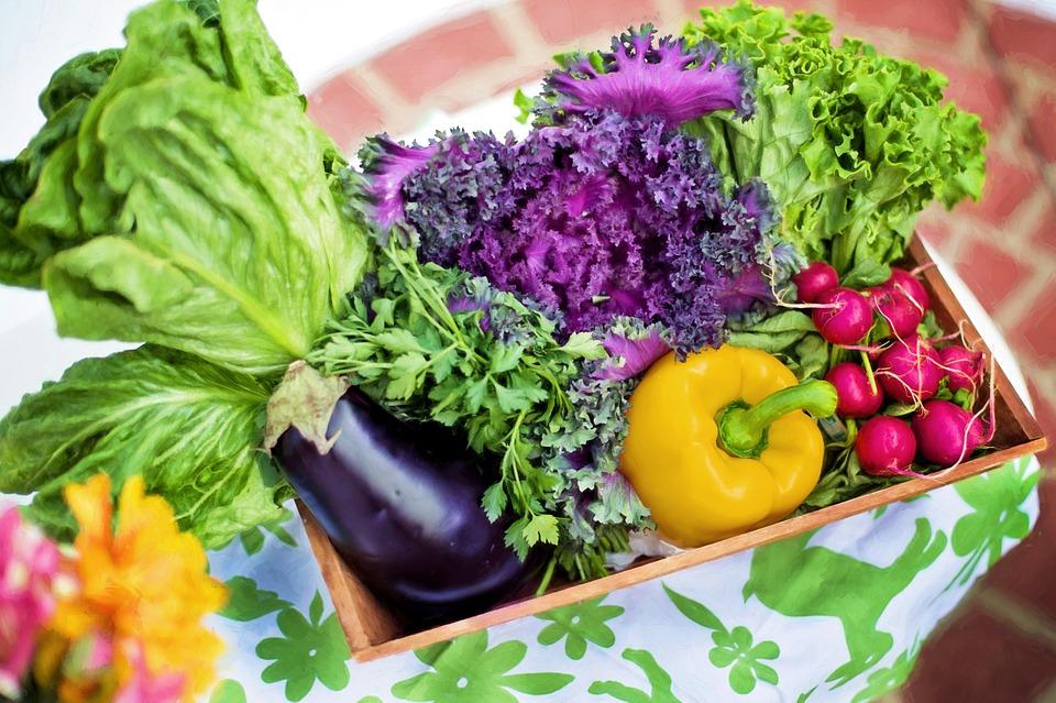 consumir organicos faz bem a saude - Por que consumir orgânicos pode ser uma das melhores decisões da sua vida?