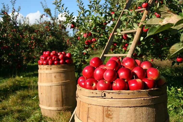 consumir organicos faz bem a saude1 - Por que consumir orgânicos pode ser uma das melhores decisões da sua vida?